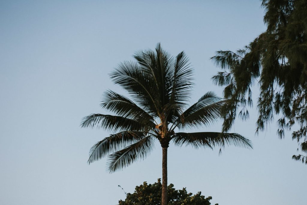 Ślub na Hawajach, Sesja ślubna na Hawajach, wedding sesion Hawaii, Hawaii wedding photographers, wedding sesion Hawaii